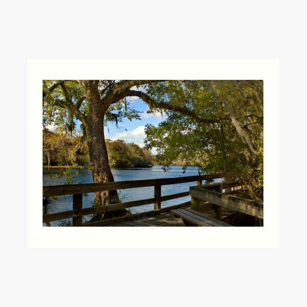 Boardwalk on the Suwannee River Art Print