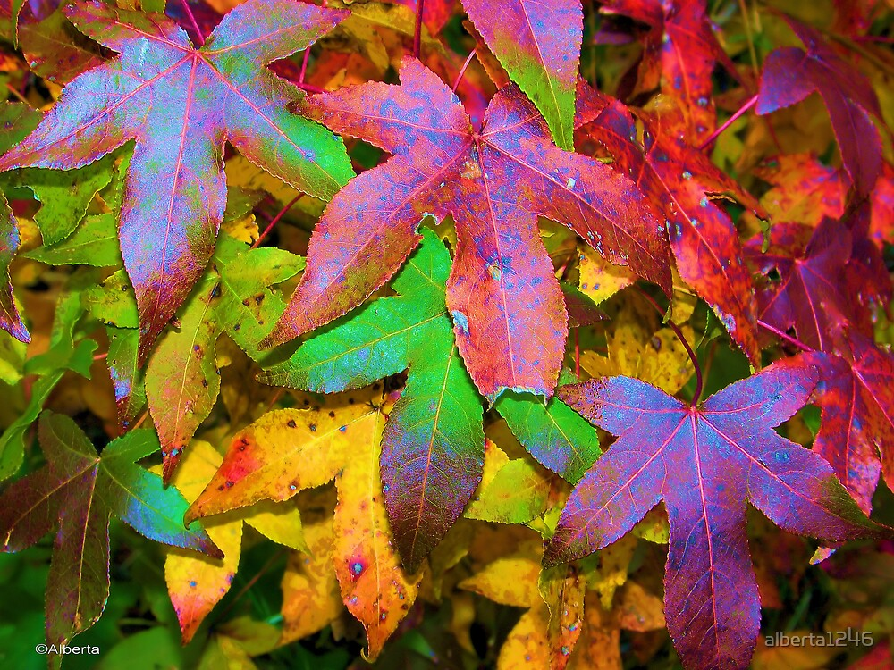 Pretty Leaves by alberta1246