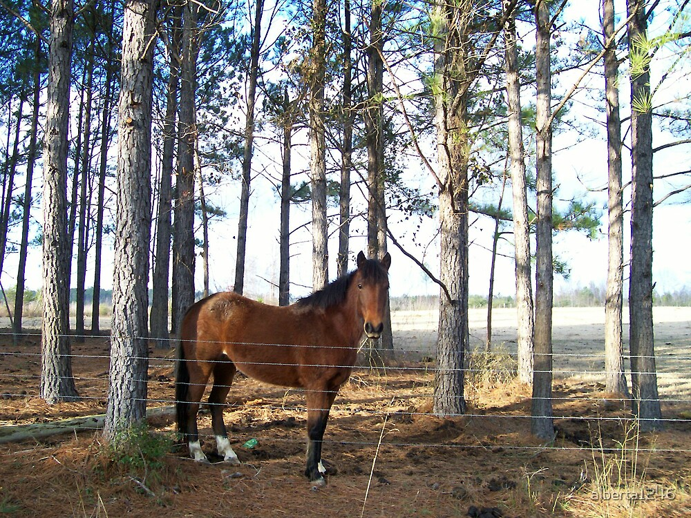 Horse by alberta1246