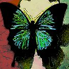 butterfly by NIKULETSH