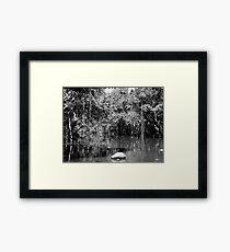 Rainforest Framed Print