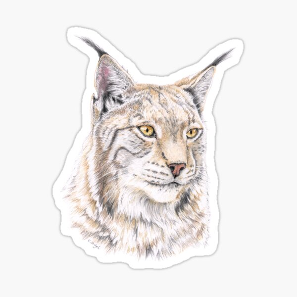 Lynx - Colored Pencil Sticker