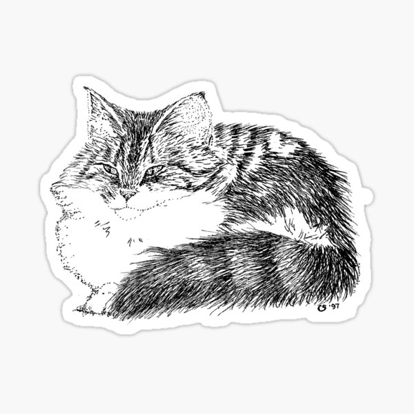 Maine Coon Cat Sticker