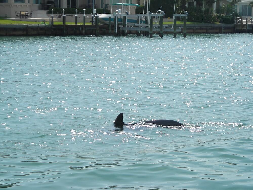 Dolphin by Jottilo