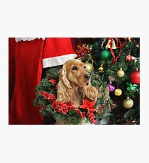 Merry Cocker Christmas Photographic Print