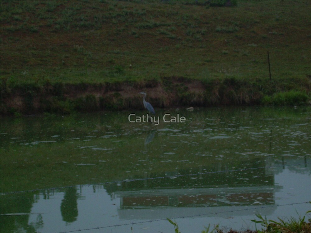 REFLECTION by Cathy Cale
