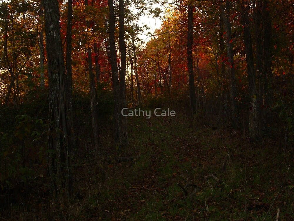 A Wall of Trees by Cathy Cale