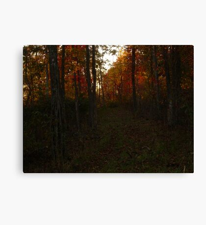 A Wall of Trees Canvas Print
