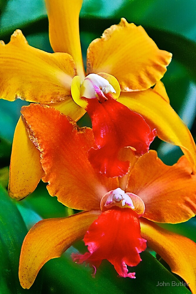 Colorful Orchids by John Butler