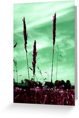 Green Horizon  by Bianca Stanton