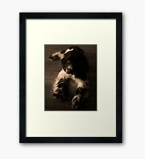 Cocker Spaniel Framed Print