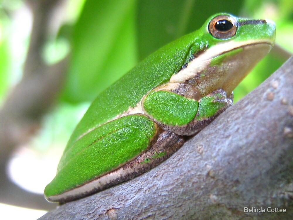 frog in bonsai by Belinda Cottee