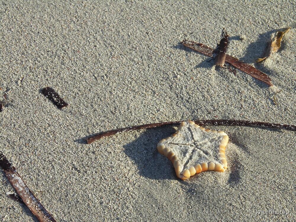 Starfish by khertihotep