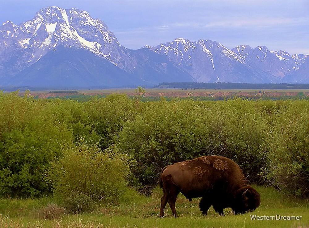 ~ Where The Buffalo Roam ~ by WesternDreamer
