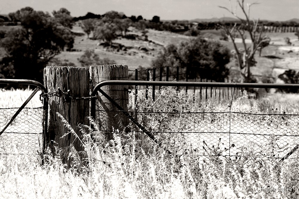 Fence by Katie cann