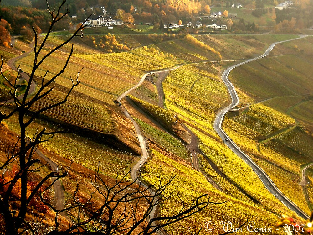 Golden winefields... by Wim Conix
