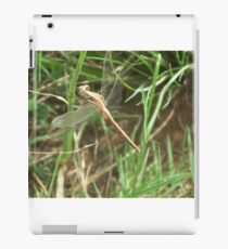 Twostriped Skimmer iPad Case/Skin