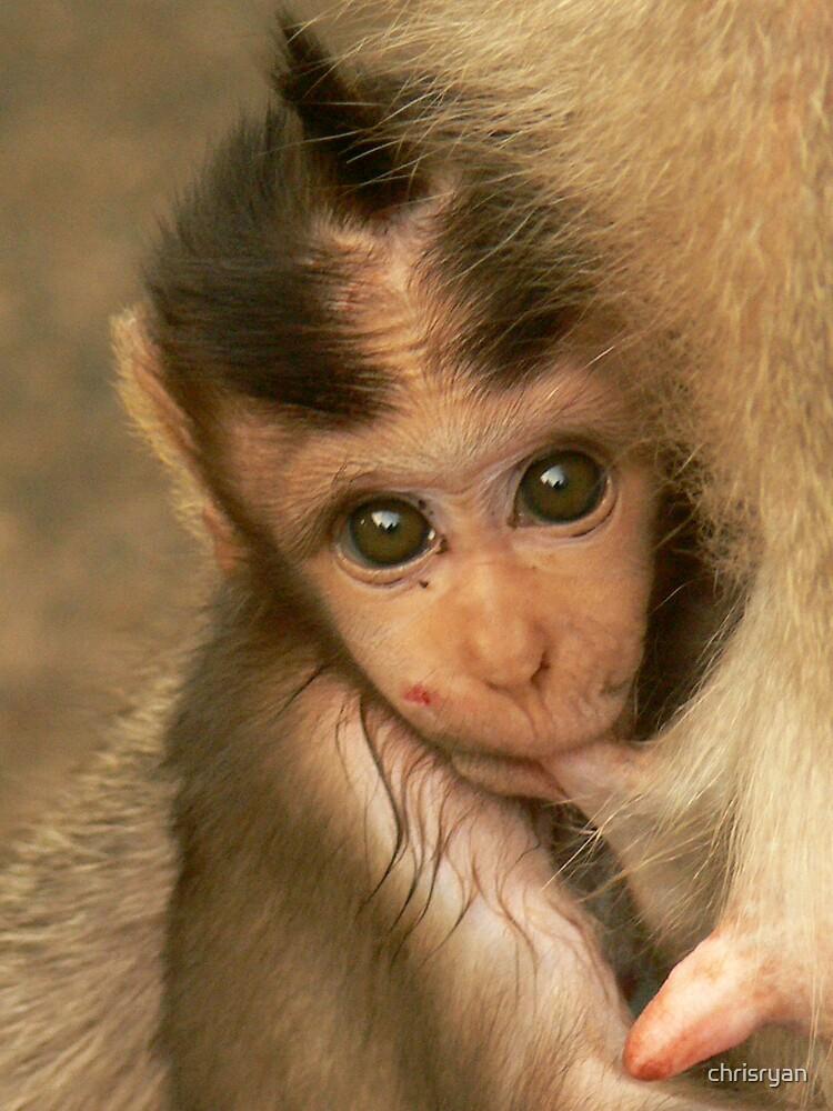 Bali Monkey by chrisryan