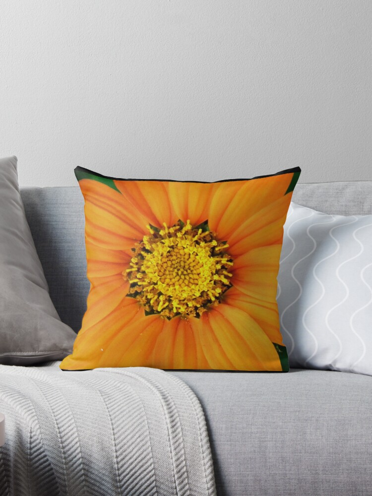 Mexican sunflower by Shaun Swanepoel