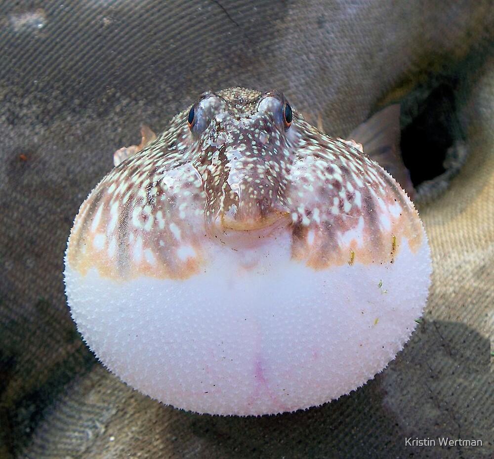 Blowfish by Kristin Wertman