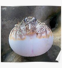Blowfish Poster