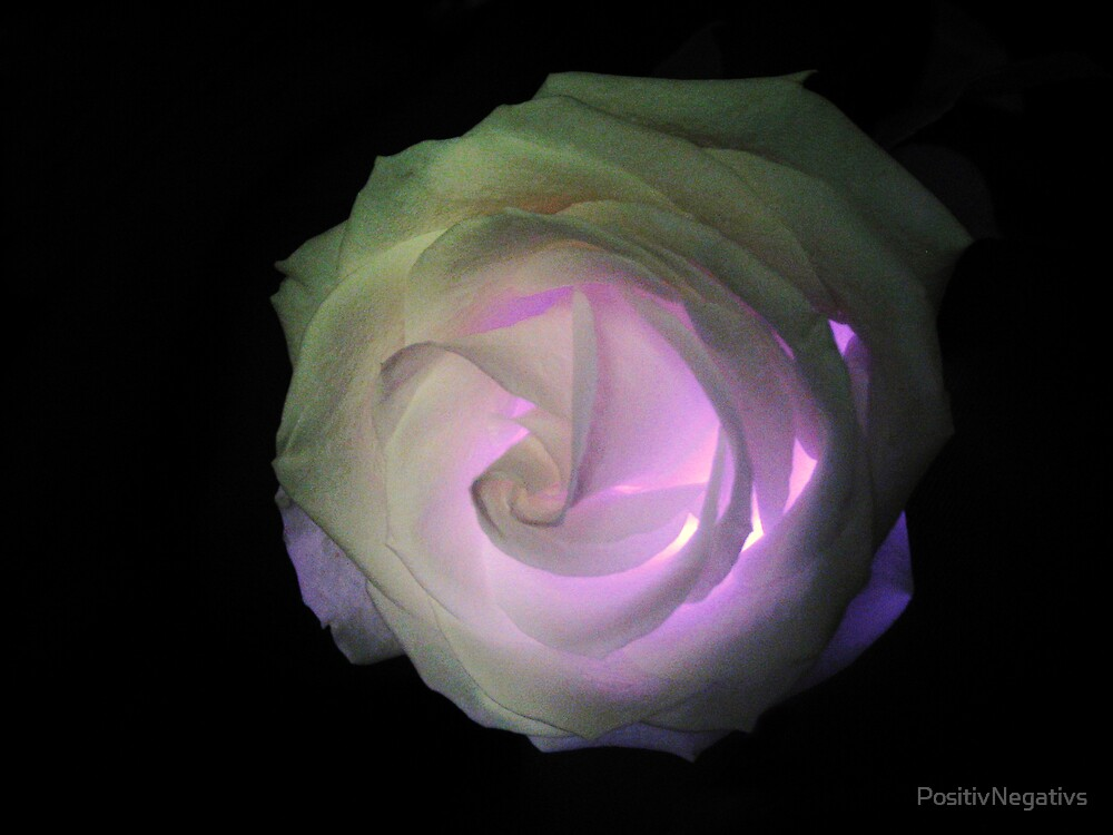 The Fairy Lit the Rose Within by PositivNegativs