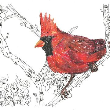 Red Cardinal Bird illustration by andreawillette