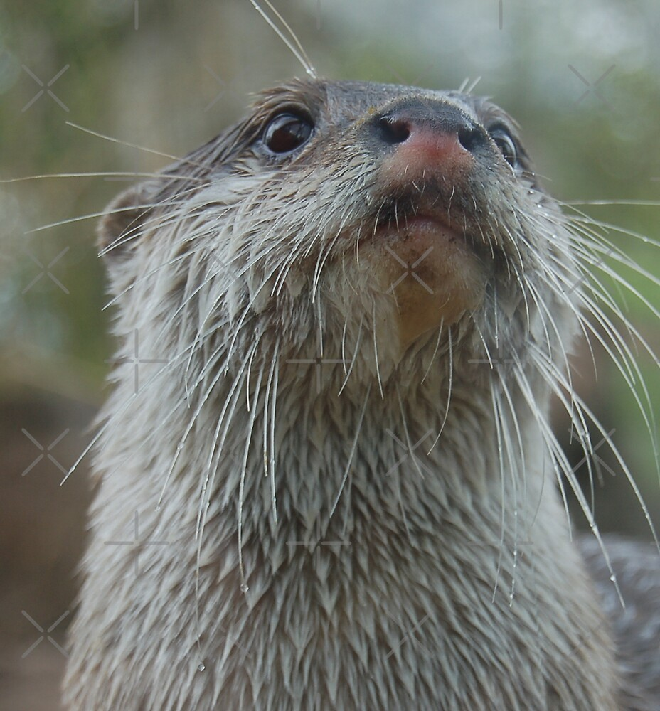Otterly Cute by ApeArt
