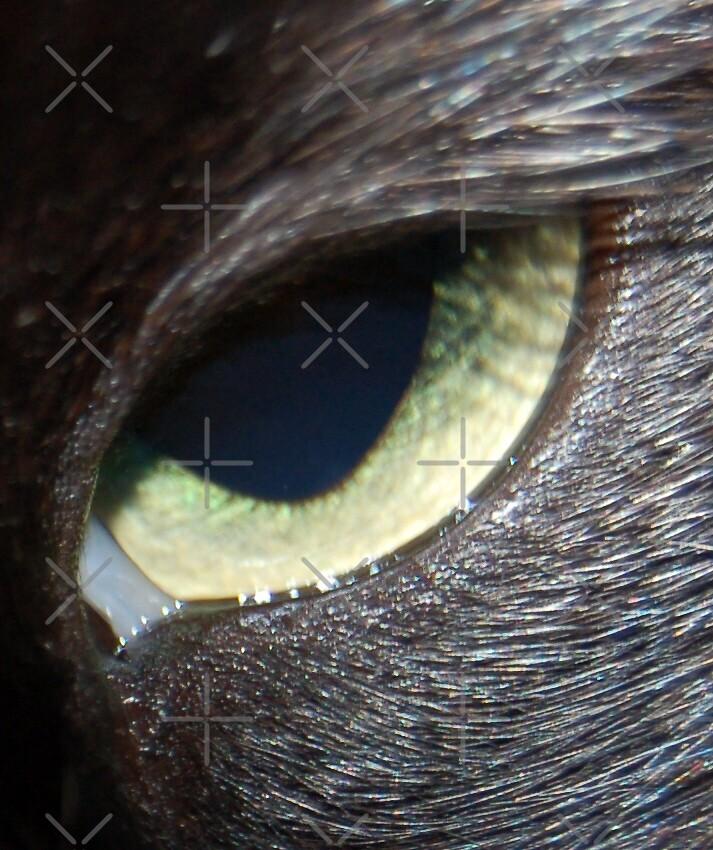 Cat's Eye by ApeArt