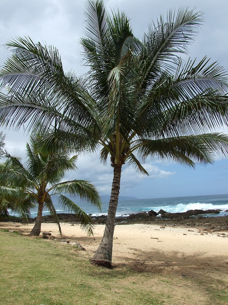 Palm Tree 2 by Lainey Simon