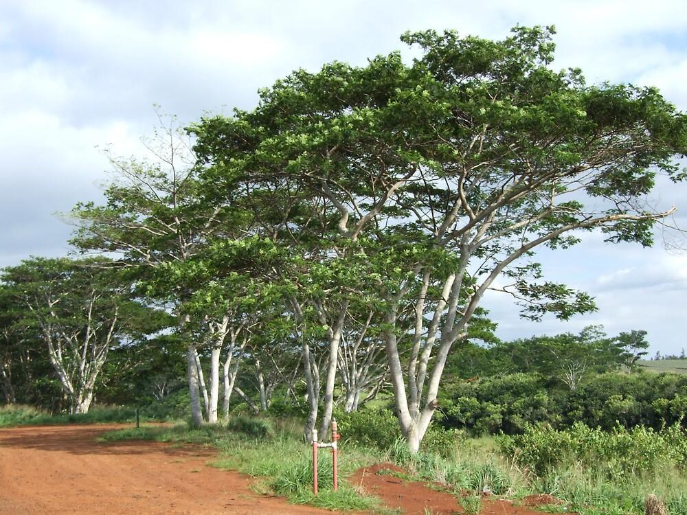 Trees by Lainey Simon
