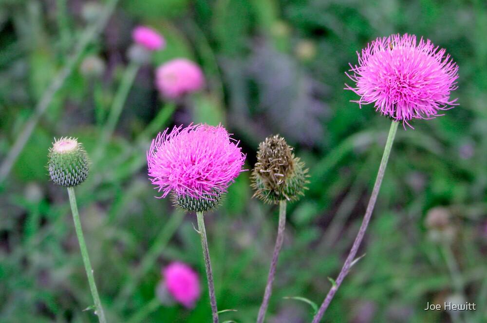 Purple Flower by Joe Hewitt