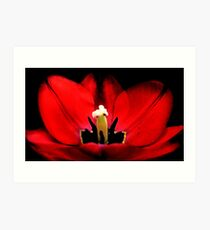 Like Red on a Tulip Art Print