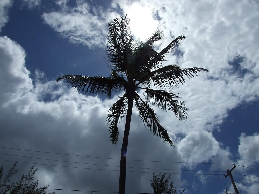 Palm Tree 5 by Lainey Simon