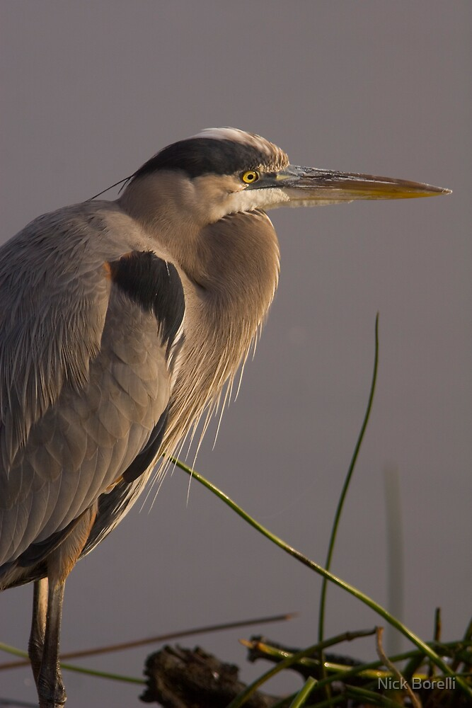Bird of Paradise by Nick Borelli