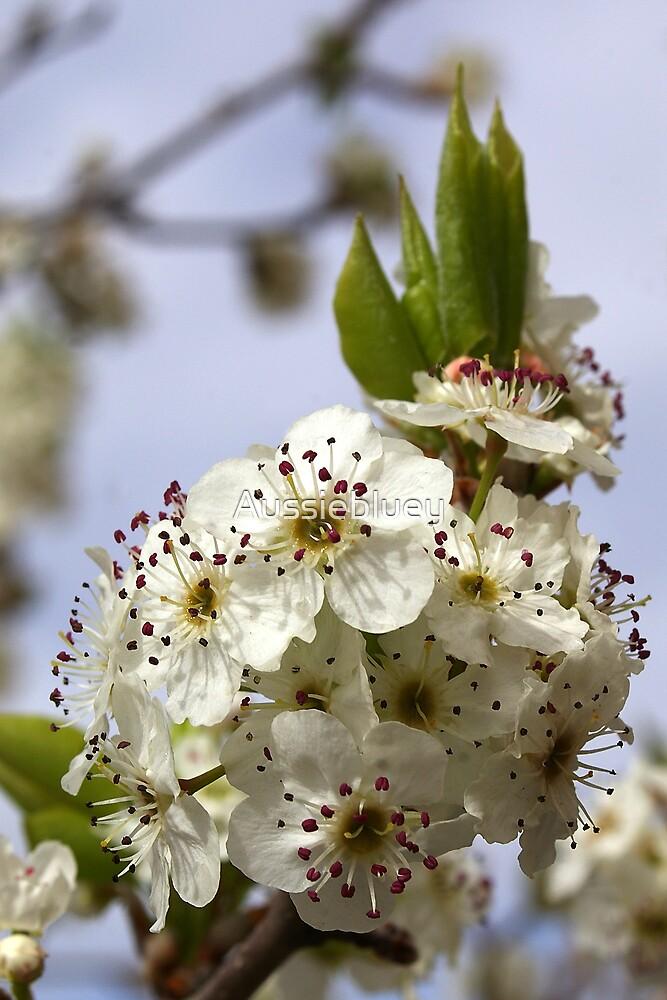 Blossom by Aussiebluey