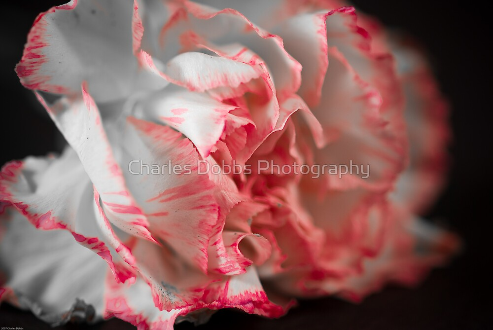 Pigment of Imagination by Charles Dobbs Photography