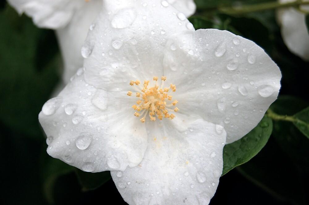 Full Bloom by KayaROriginal