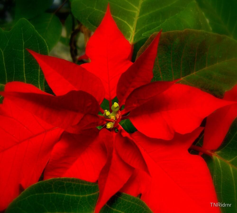 Happy Holidays by TNRidrnr