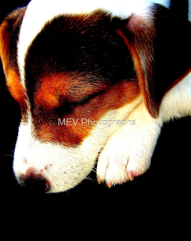 Asleep by MEV Photographs