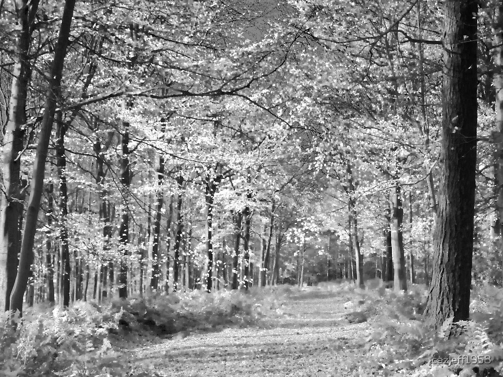 Woods by cazjeff1958