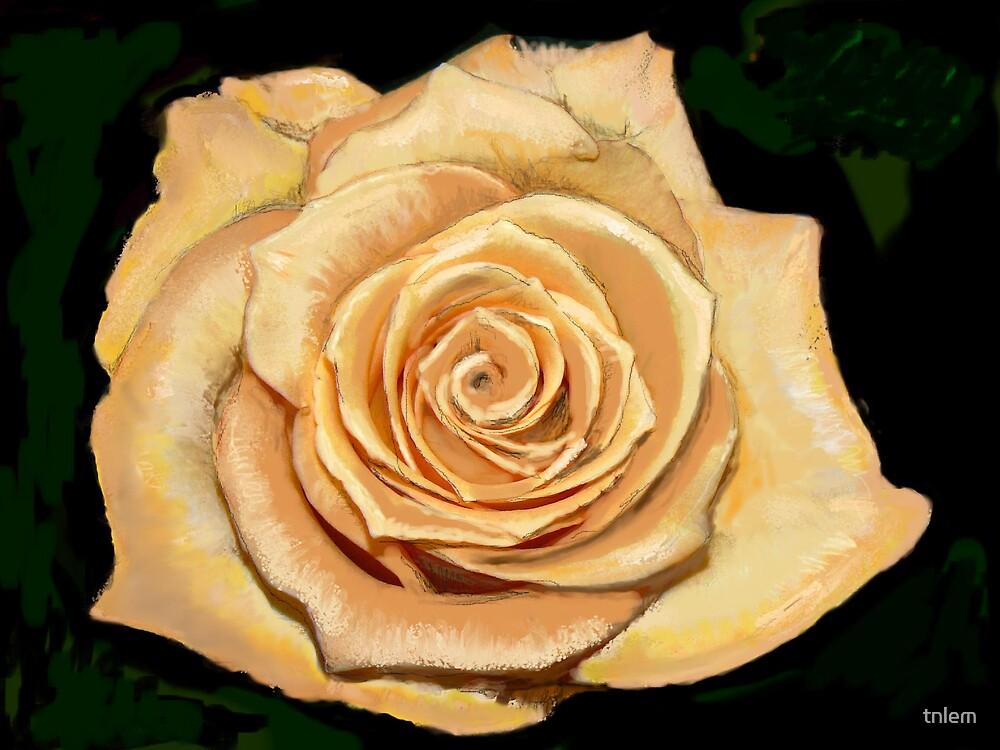 a rose by tnlem