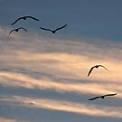 Seagulls before sunset by David Chesluk