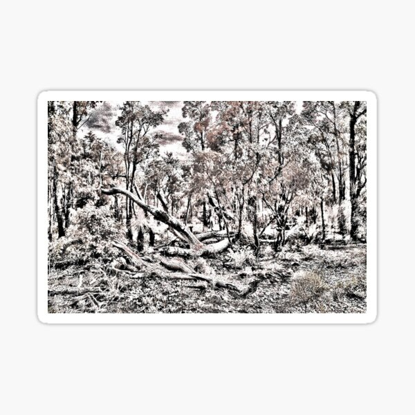 Bushland in Bungendore Park, WA Sticker