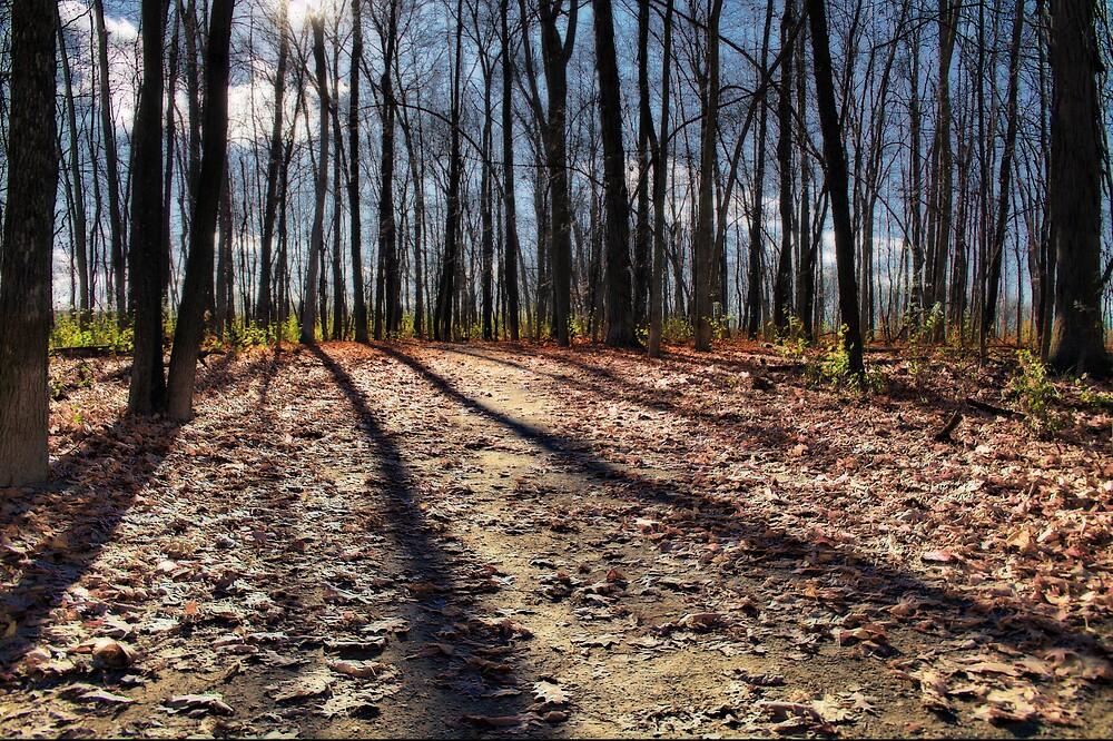 Path to the Sun by Murtasma