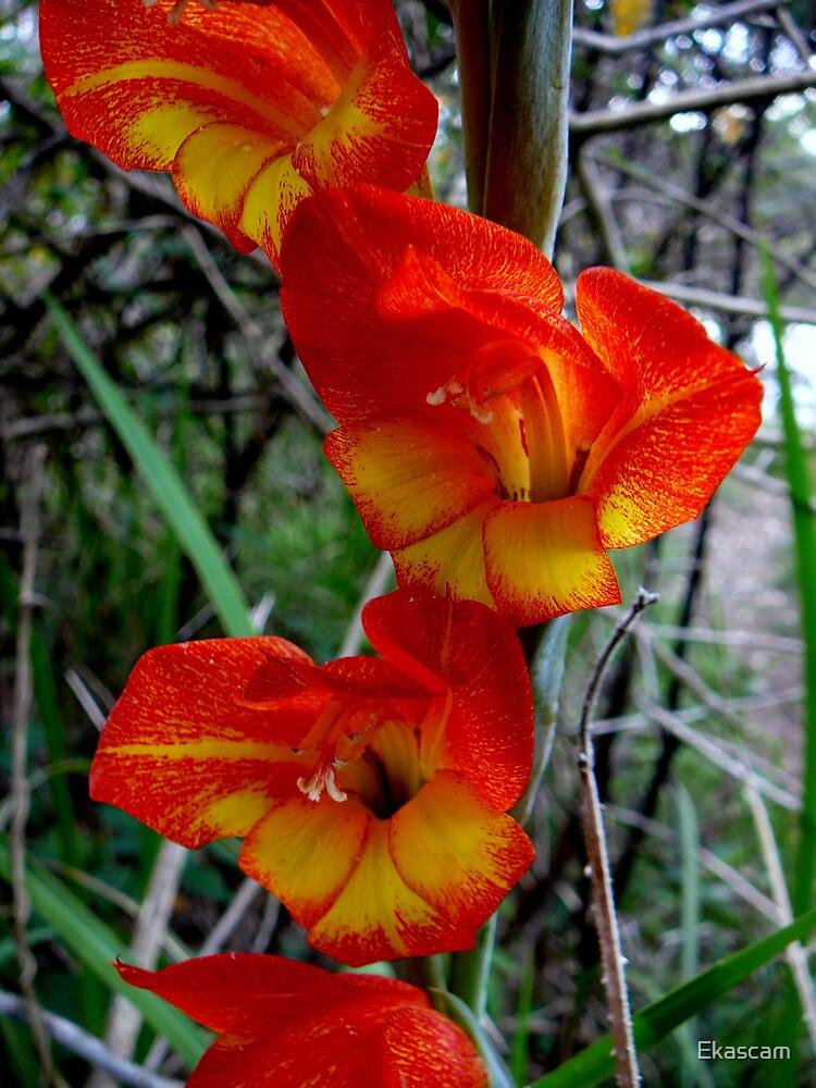 WILD BUSH FLOWERS by Ekascam