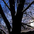 Comic Abstract Shaded Snow Tree by steelwidow