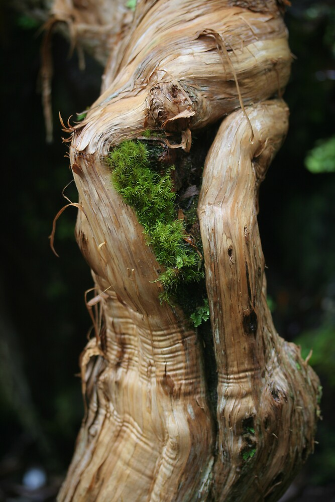 Moss in a gnarled tree by anobleperson