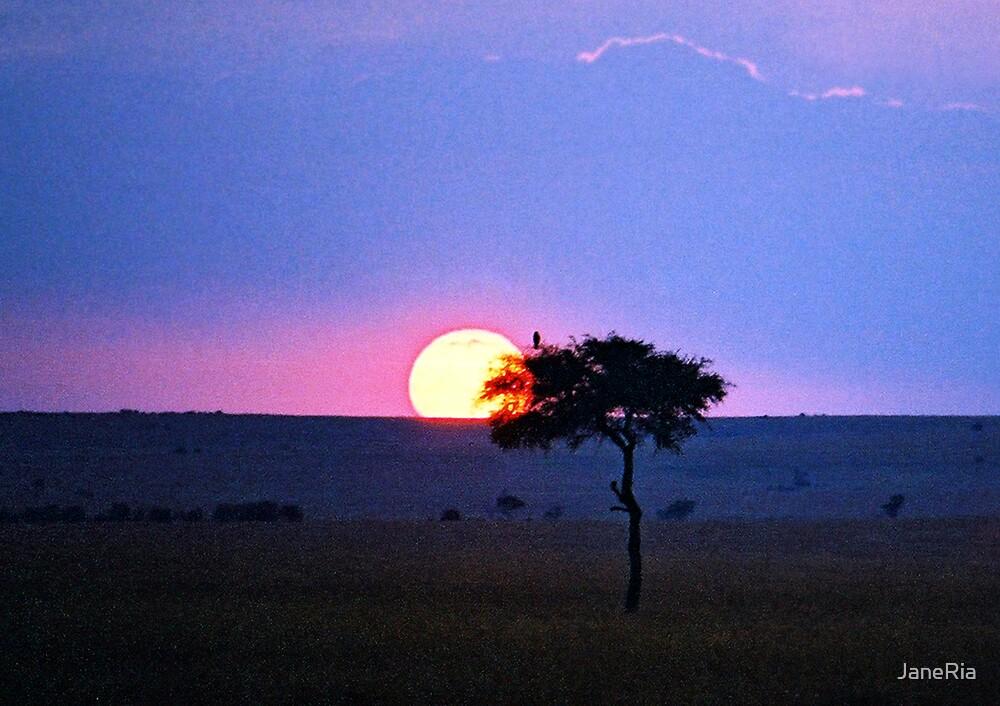 Savannah Sunset by JaneRia