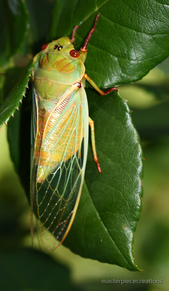 Cicada by masterpiececreations